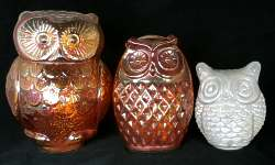 Owls from India